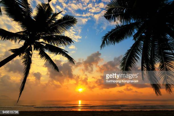 sunset over the tropical beach with coconut palm and boat at koh tao , thailand . koh tao is a paradise island in thailand. silhouettes of palm trees and amazing cloudy sky on sunset at tropical beach - トロピカルフルーツ ストックフォトと画像