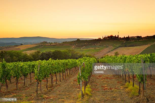 Sunset over the vineyard from Tuscany