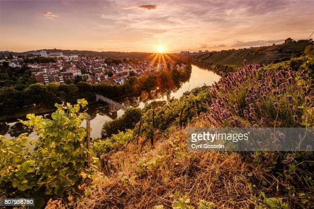 Sunset over the Vineyards at the Neckar