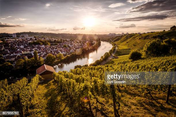 sunset over the vineyards at the neckar - baden württemberg stock photos and pictures