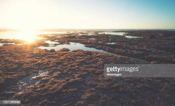 sunset over tidal pools along the pacific ocean coast.  toned image - cross processed stock pictures, royalty-free photos & images
