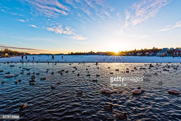 sunset over tjornin lake, reykjavik - ignatius tan stock photos and pictures