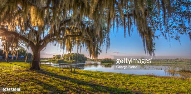 sunset over tree by lake, florida, usa - florida nature stock pictures, royalty-free photos & images