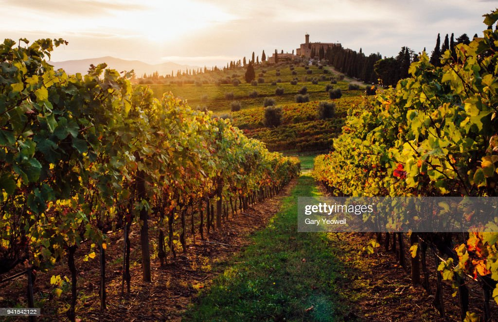Sunset over vineyards in Tuscany : Stock Photo