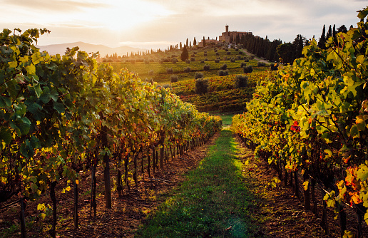Sunset over vineyards in Tuscany - gettyimageskorea