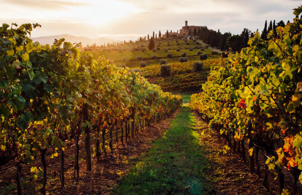 Sunset Over Vineyards Tuscany - Fine Art prints