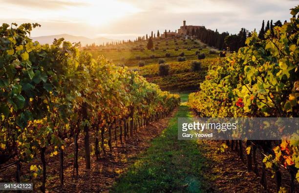 sunset over vineyards in tuscany - tuscany stock pictures, royalty-free photos & images