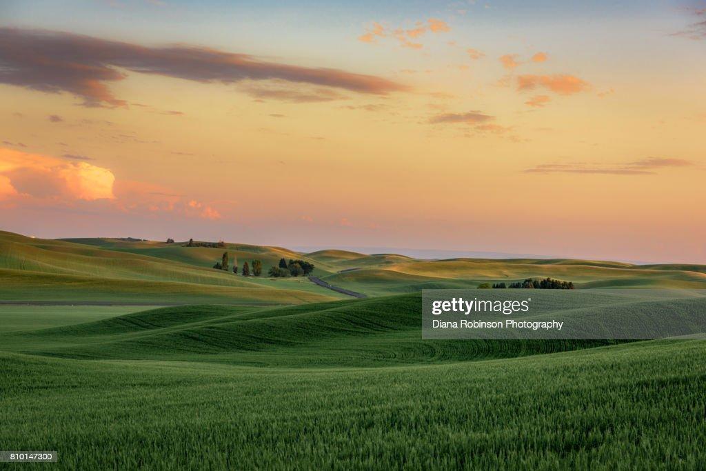 Sunset over wheat fields near Palouse, Eastern Washington State : Foto de stock