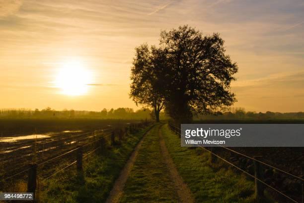sunset path - william mevissen stockfoto's en -beelden