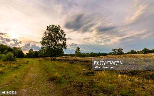 sunset path - william mevissen stock-fotos und bilder