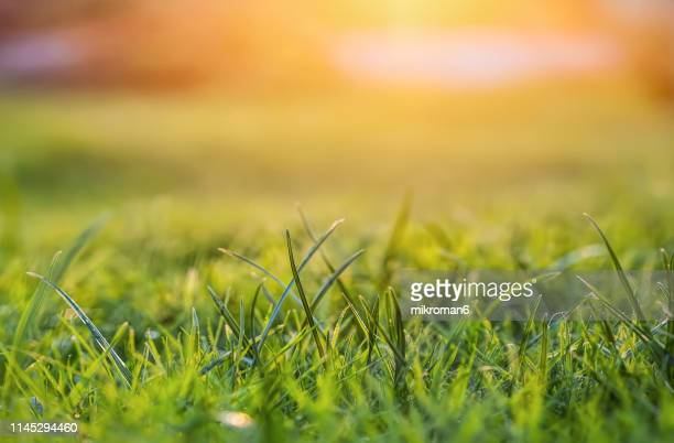 sunset - grass picture stock pictures, royalty-free photos & images