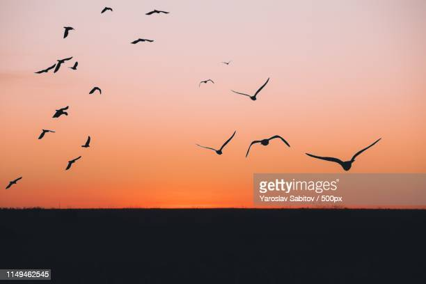 sunset - gliding stock pictures, royalty-free photos & images