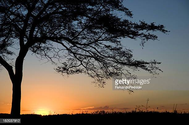 sunset - mato grosso state stock pictures, royalty-free photos & images