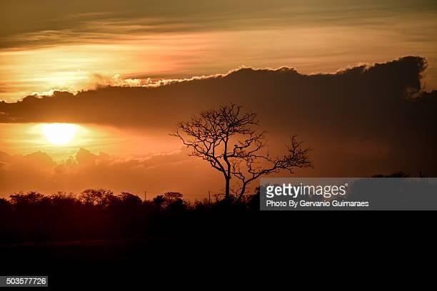 sunset - silhueta stock photos and pictures