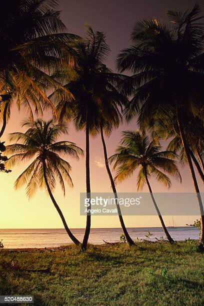sunset, pigeon point, tobago, trinidad and tobago, caribbean - paisajes de trinidad tobago fotografías e imágenes de stock