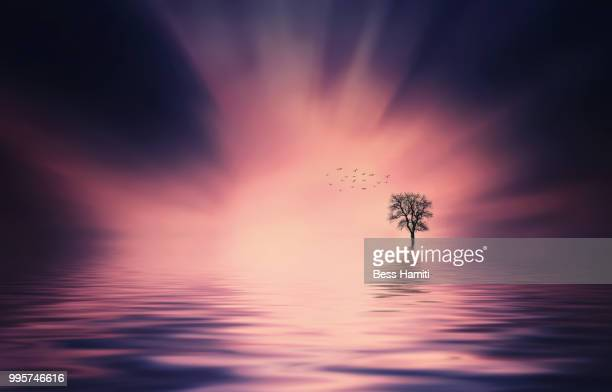 sunset reflected in a lake with a tree and clouds - dawn bess stock pictures, royalty-free photos & images