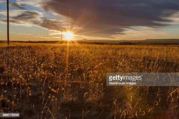 tall grass field sunset. Sunset Reflecting Off Tall Grass In Field
