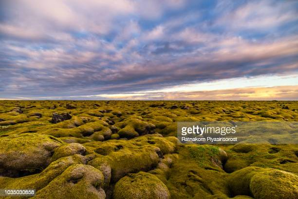 sunset scene of moss covered lava fields in south iceland - lava plain stock pictures, royalty-free photos & images