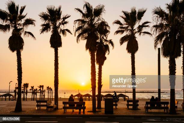 Sunset seen through the palm trees at the beach in Tel Aviv, Israel
