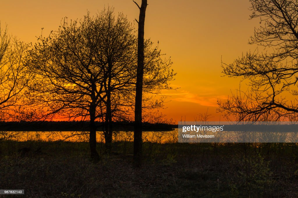 Sunset Silhouette Trees : Stockfoto