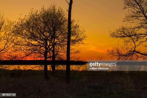 sunset silhouette trees - william mevissen bildbanksfoton och bilder