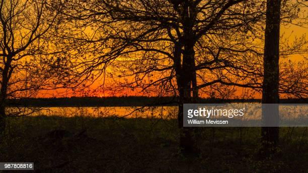 sunset silhouettes - william mevissen ストックフォトと画像