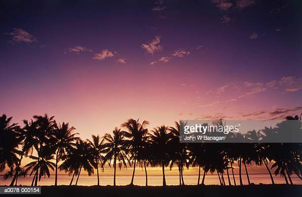 Sunset Sky Over Coconut Palms