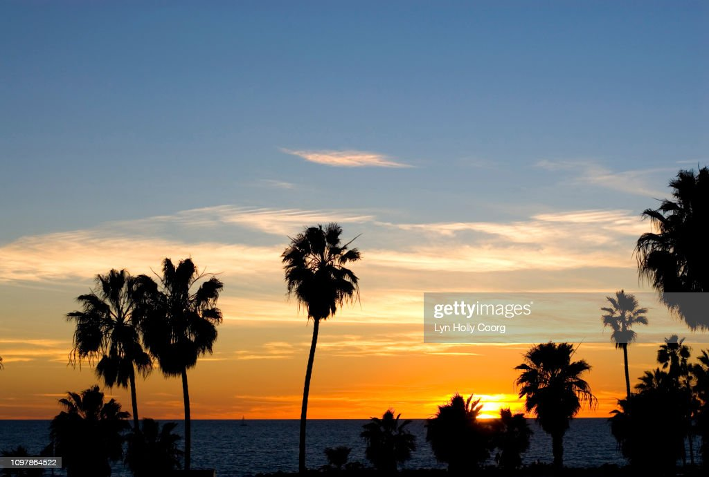 Sunset sky with palm trees in foreground : Stock Photo