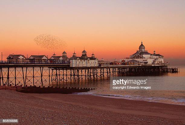 sunset & starlings  - eastbourne stock pictures, royalty-free photos & images