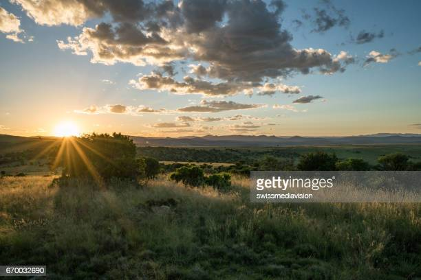 Sunset sunbeam at Mountain Zebra national park at sunset, South Africa