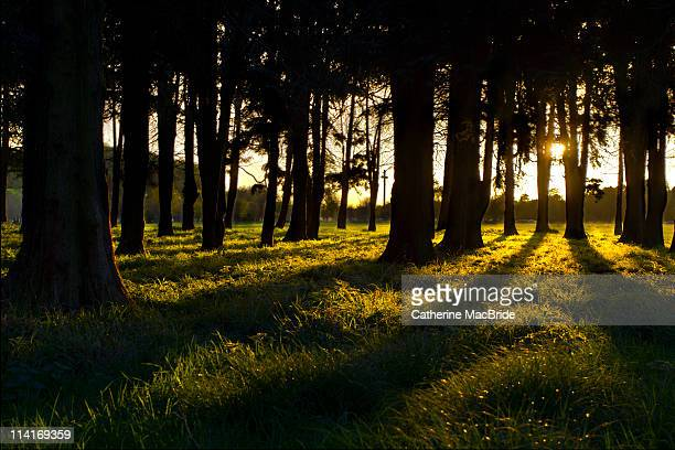 sunset through in phoenix park, dublin - catherine macbride stock pictures, royalty-free photos & images