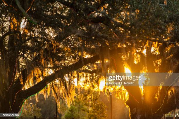 sunset through live oak trees - holy city park stock pictures, royalty-free photos & images