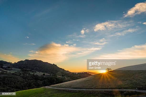 sunset through oak - don smith stock-fotos und bilder