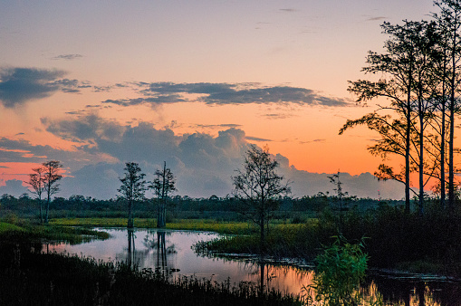 sunset through the trees of the swamps 878543376