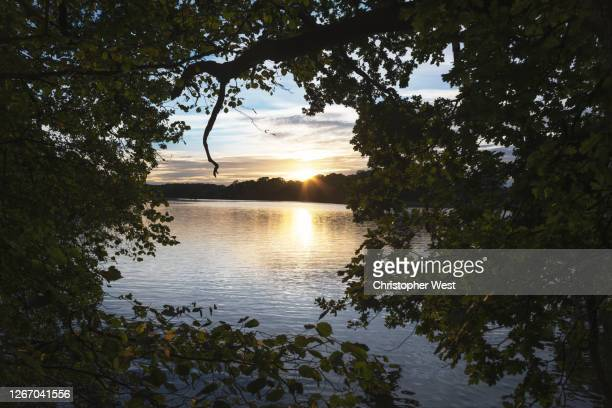 sunset through the trees - southampton england stock pictures, royalty-free photos & images