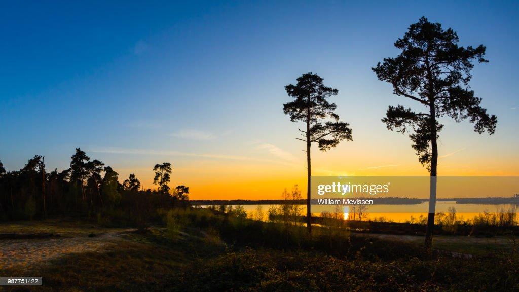 Sunset Trees : Stockfoto