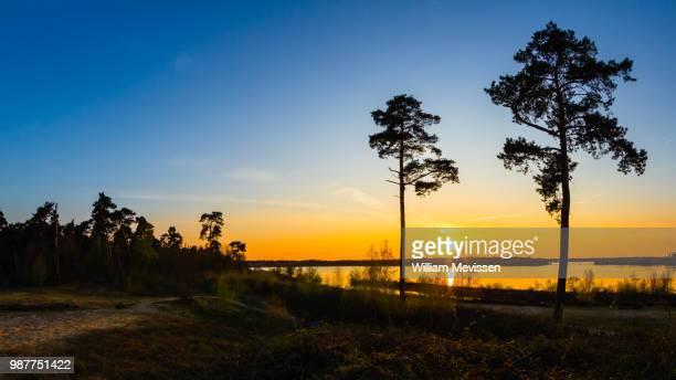 sunset trees - william mevissen bildbanksfoton och bilder