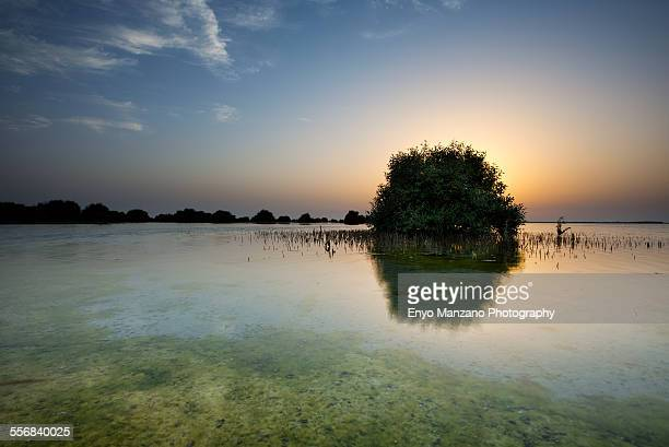 sunset umm al quwain mangrove - mangroves stock pictures, royalty-free photos & images