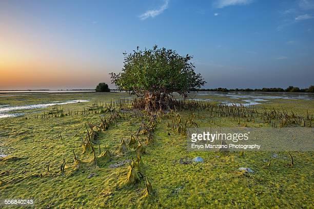 Sunset Umm Al Quwain Mangrove