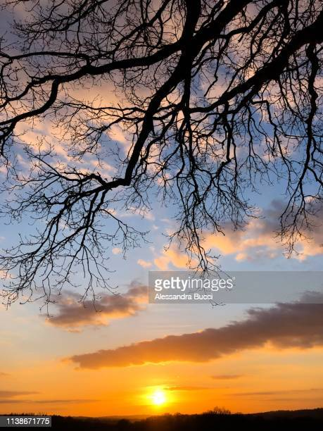 sunset under an oak tree - transparent stock pictures, royalty-free photos & images