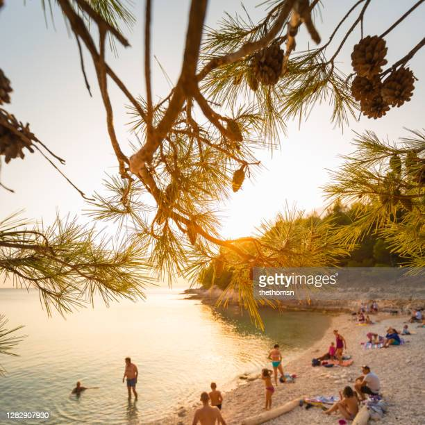 sunset under pine trees on a small beach, croatia - croatia stock pictures, royalty-free photos & images