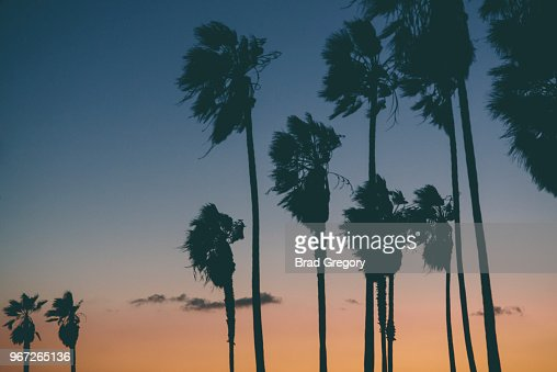Sunset - Venice Beach, California