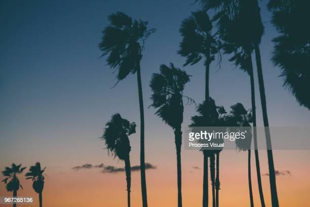 Sunset - Venice Beach, California