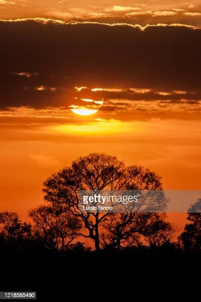 sunset view at pantanal wetlands - pantanal stockfoto's en -beelden