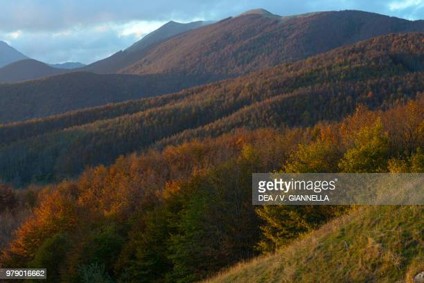 Sunset view over the woods of the Apennines from the Radici Pass Garfagnana Tuscany Italy