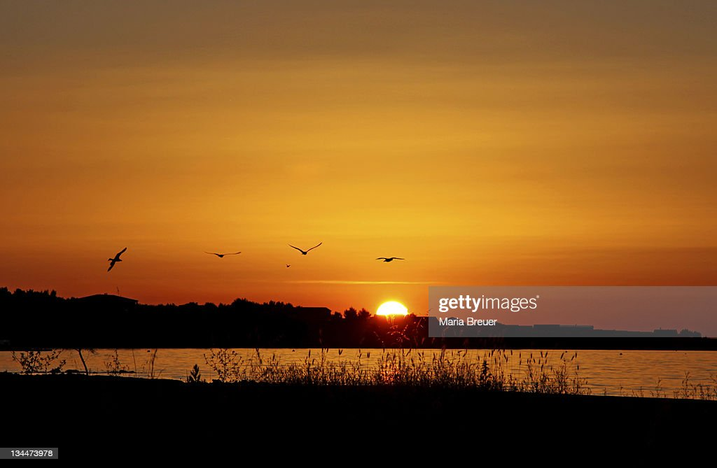 Sunset, Vir Island, Dalmatia, Croatia, Europe : Stock Photo