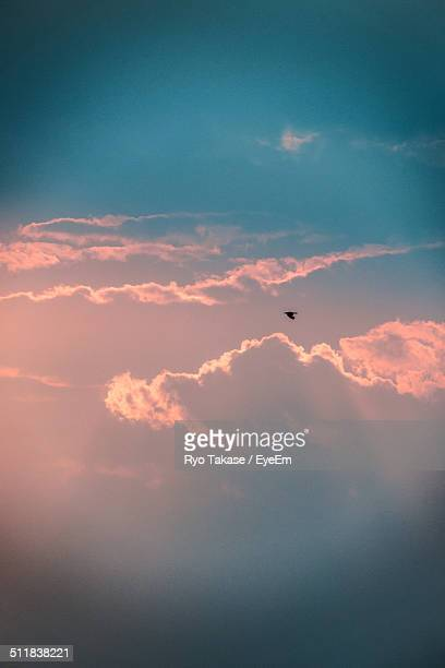 Sunset with bird silhouette