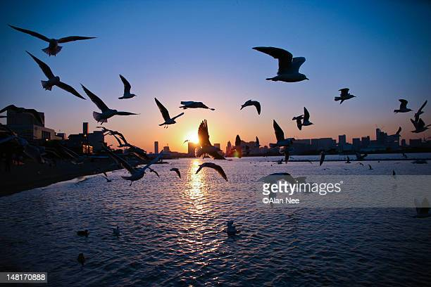 sunset with birds - nee nee stock photos and pictures
