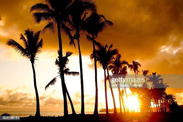 Sunset with Coconut Palms