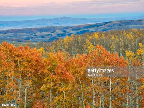 Sunset with Colorful aspens in Logan Canyon Utah in the autumn